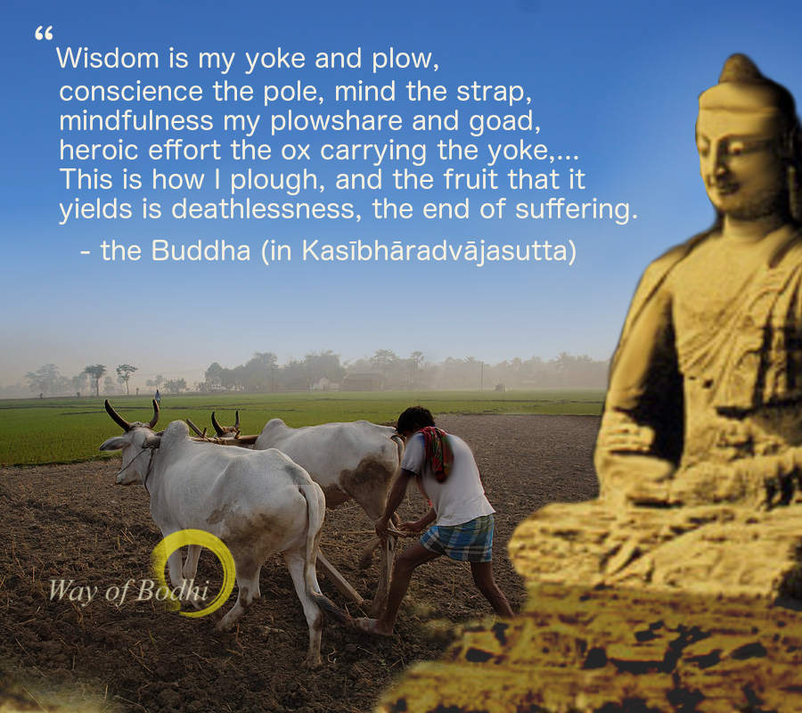 Dhamma Quote - Ploughing the realm of mind - Kasibharadvaja sutta